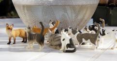 cats-1407705_640