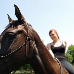 horse-1587212_640