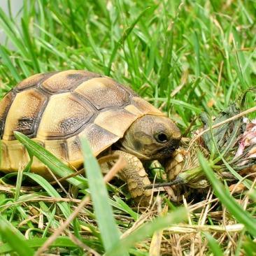 reptile-960746_640